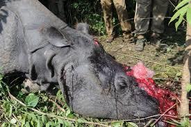 Rhinocéros tué pour sa corne